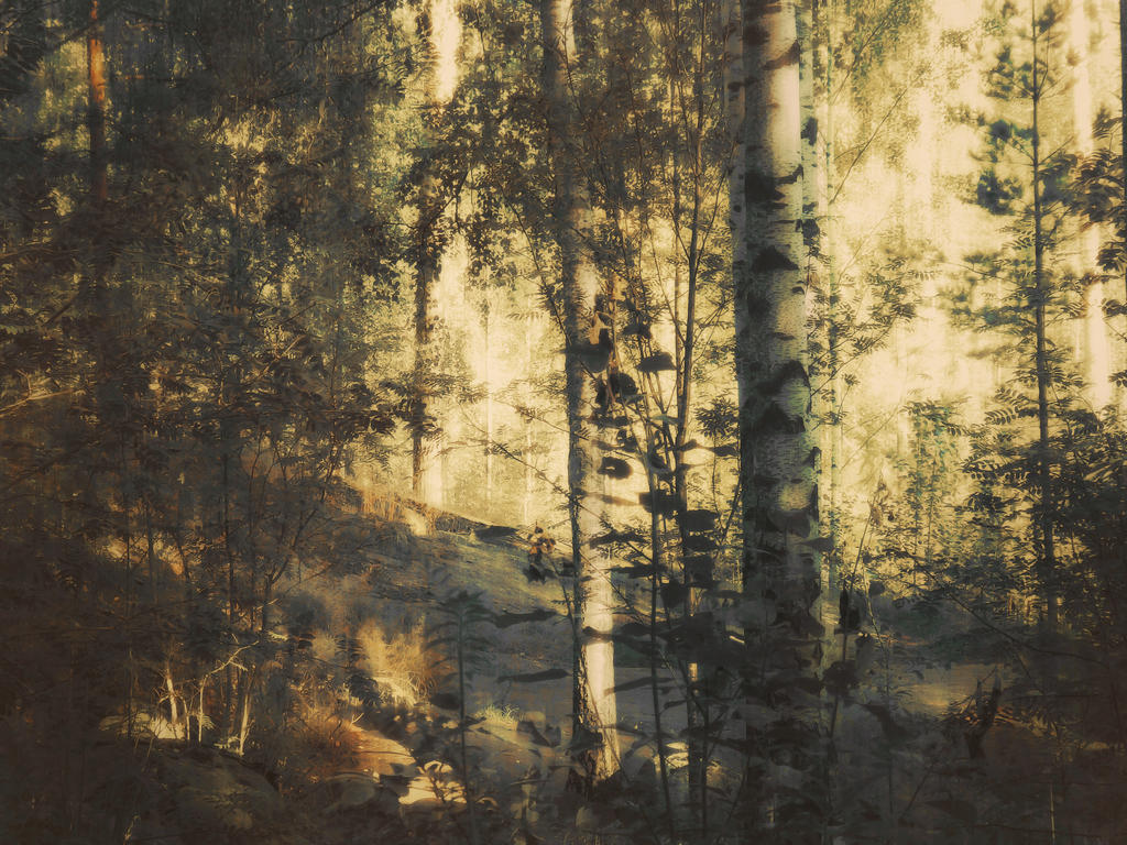 forest 15 by Amalus