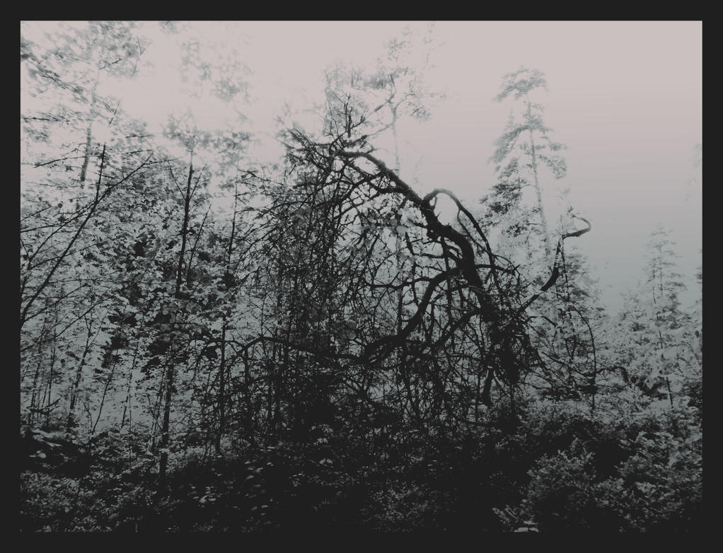 forest 30 by Amalus