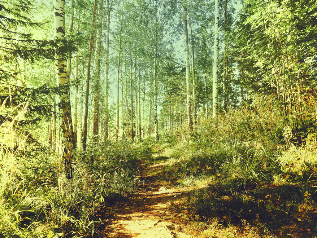 forest 37 by Amalus