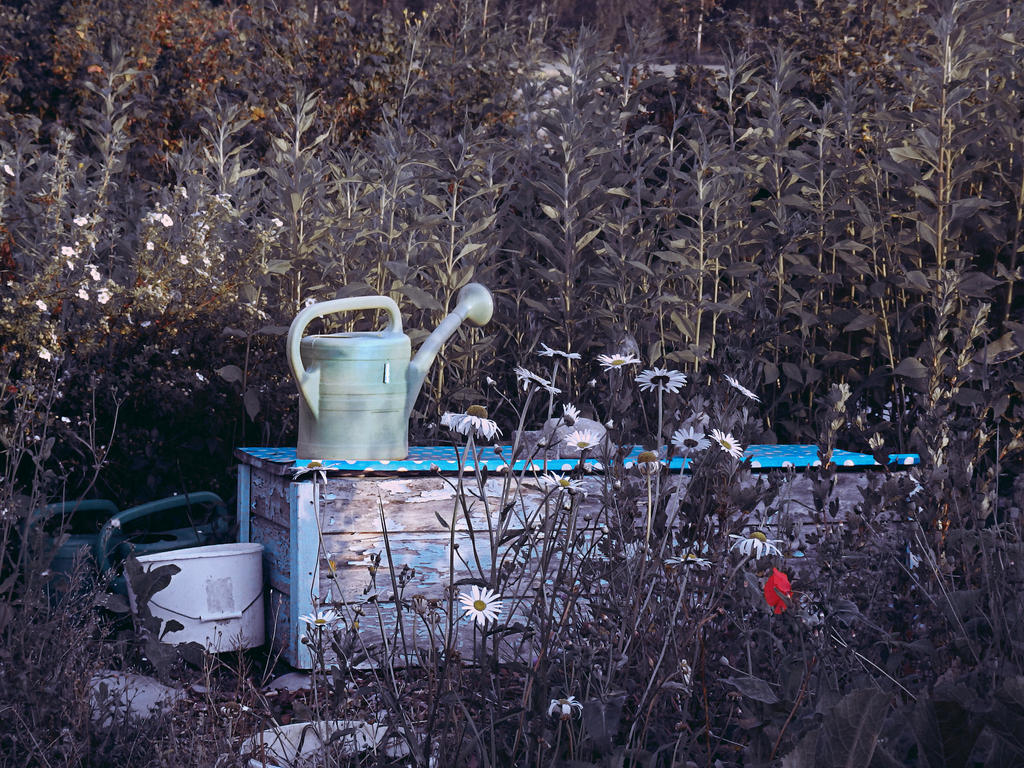 garden 17 by Amalus