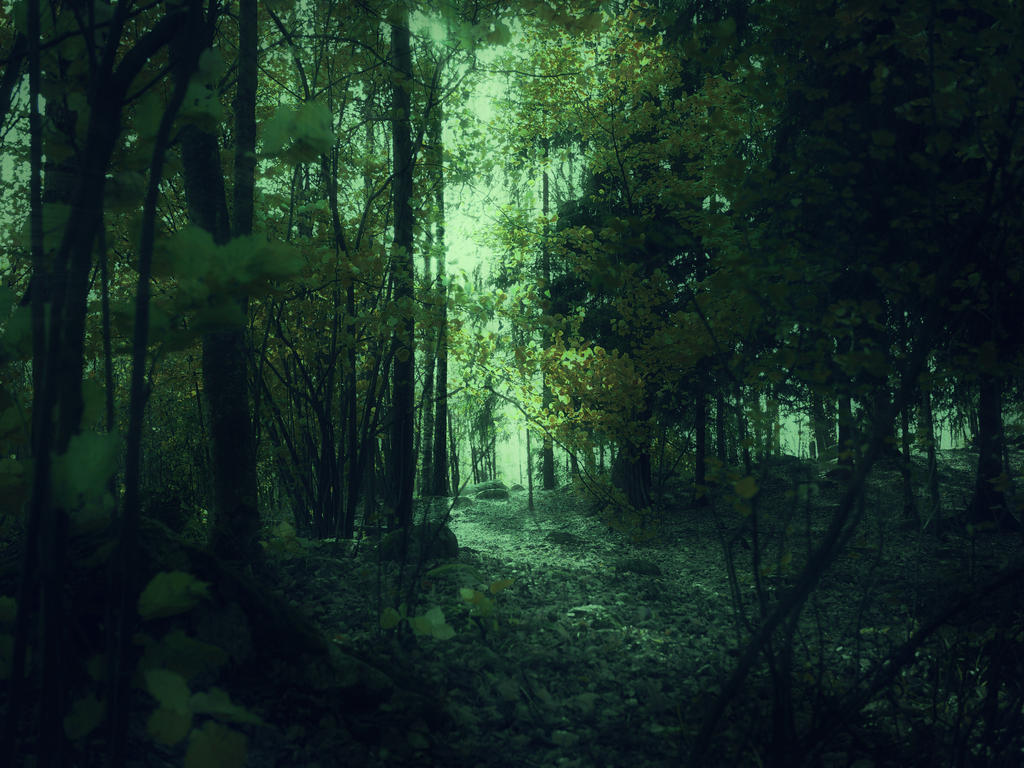Forest 45 by Amalus