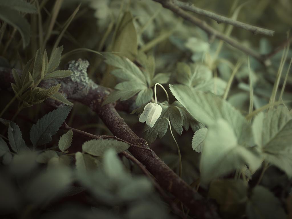 woodland 3 by Amalus
