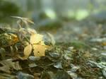 woodland 5 by Amalus