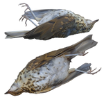 Two Dead Birds png by Amalus