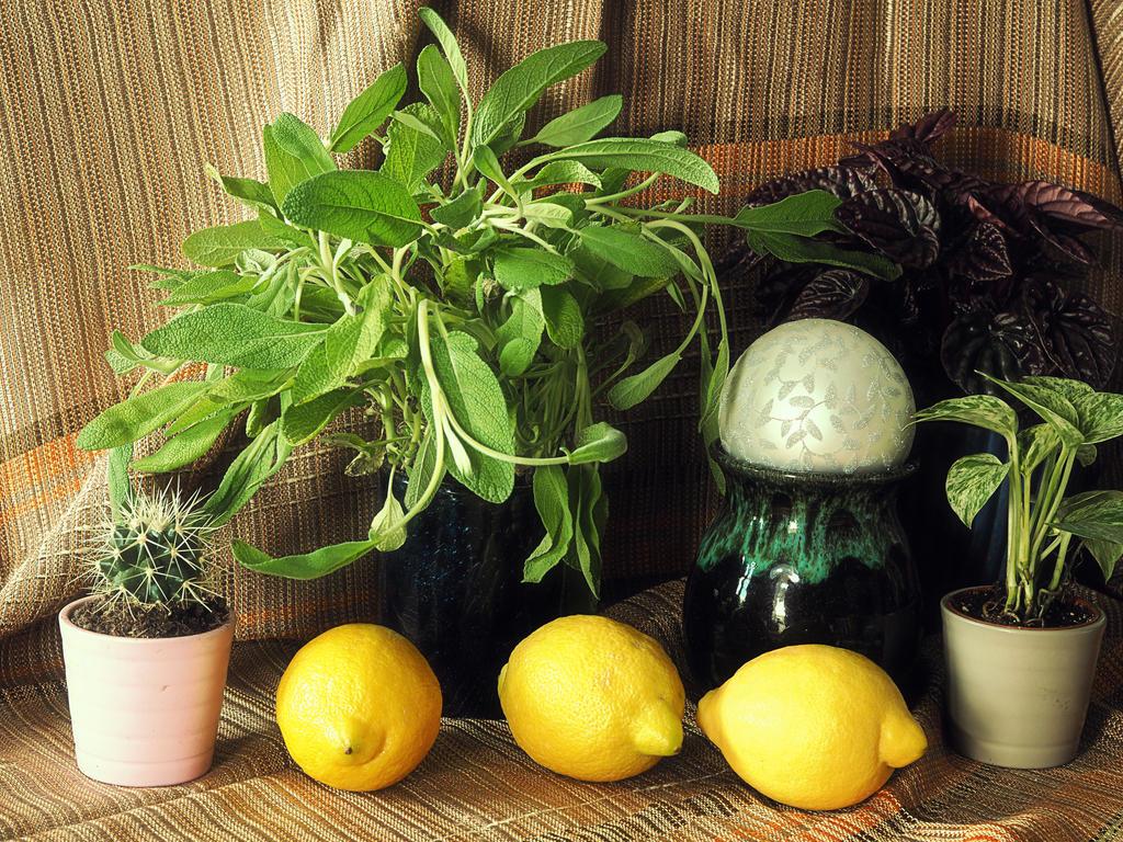 Three Lemons by Amalus