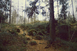 forest 61 by Amalus