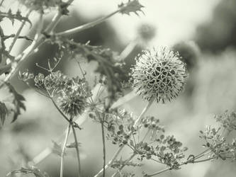 autumn by Amalus