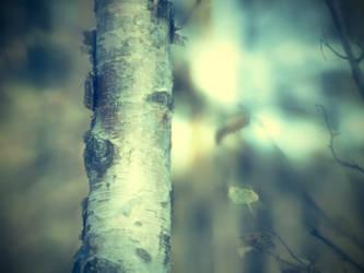 Autumn 3 by Amalus