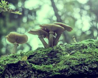 mushrooms by Amalus
