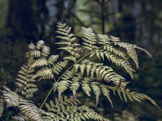 eagle fern turned yellow by Amalus