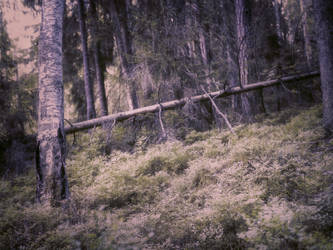 forest 62 by Amalus