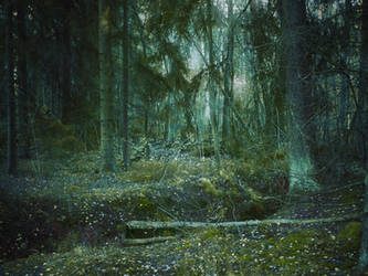 forest 63 by Amalus