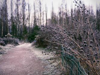 Frozen garden by Amalus