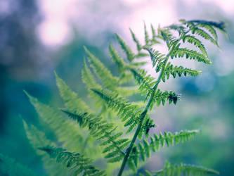 ferns by Amalus