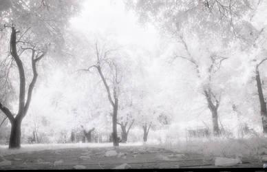Magic Garden 2 by CorsoDomenic
