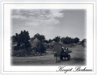donkey ride some where by konjit