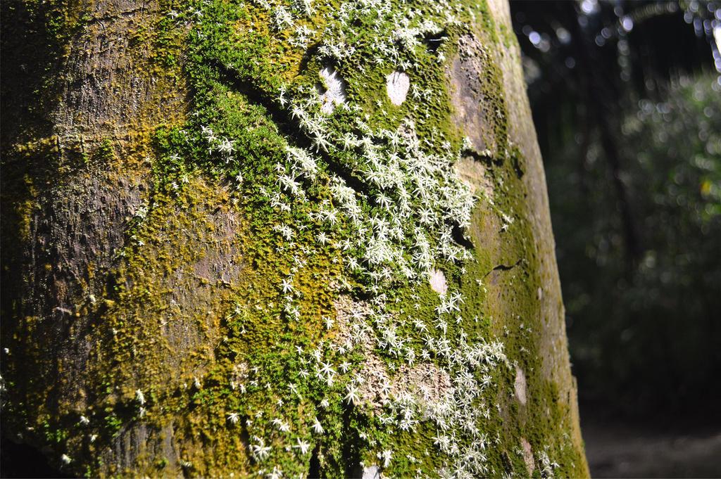Moss by Dlaeth