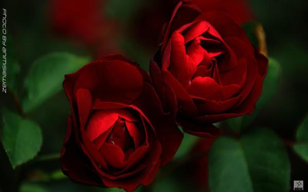 Twin flowers by animisiewaz