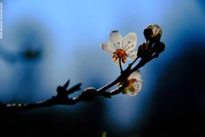 Spring variations [2] by animisiewaz