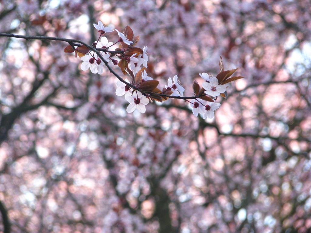 Spring says Hi!
