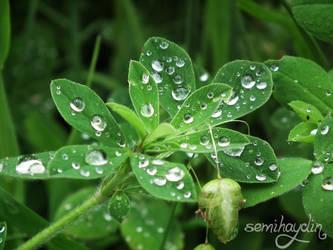 Water Drops by semihaydin