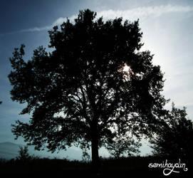 Oak Tree by semihaydin