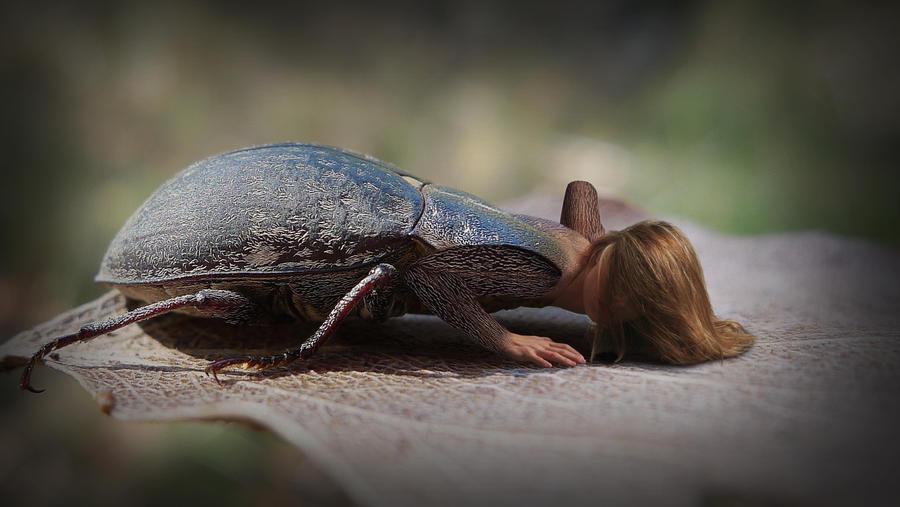 Ladybug by solkee