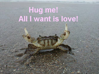 Love Krab by Kairu-Hakubi