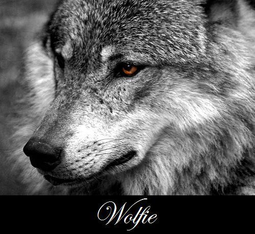 Wolfie Avatar by Shadow-Wolfen