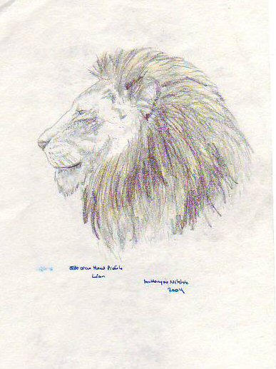 Lion head side profile