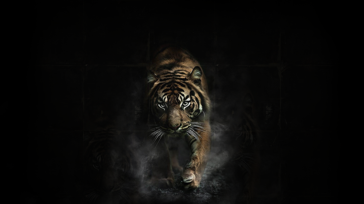 tiger artzhiken on deviantart