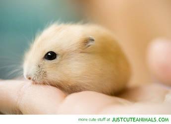 Baby Hamster by Katzenja