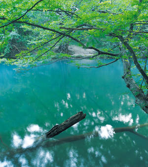 Tree reflected in the river