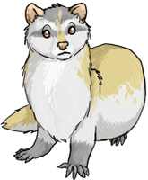 Ferret by SorrenFey