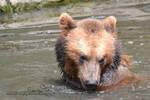 Shy Bear by SorrenFey