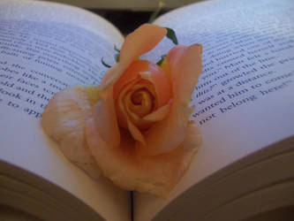 Beauty In A Book by 40DiffKindsOfSadness