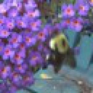 dplusc's Profile Picture