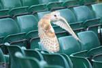 Owl in flight - Stock 4