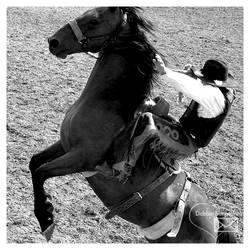 Ride em Cowboy by Tepara