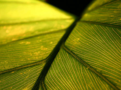 Leaf with veins
