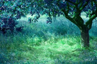 In Wonderland by Sphongled