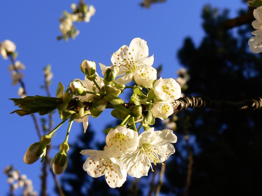 Springtime...3 by FERONAS