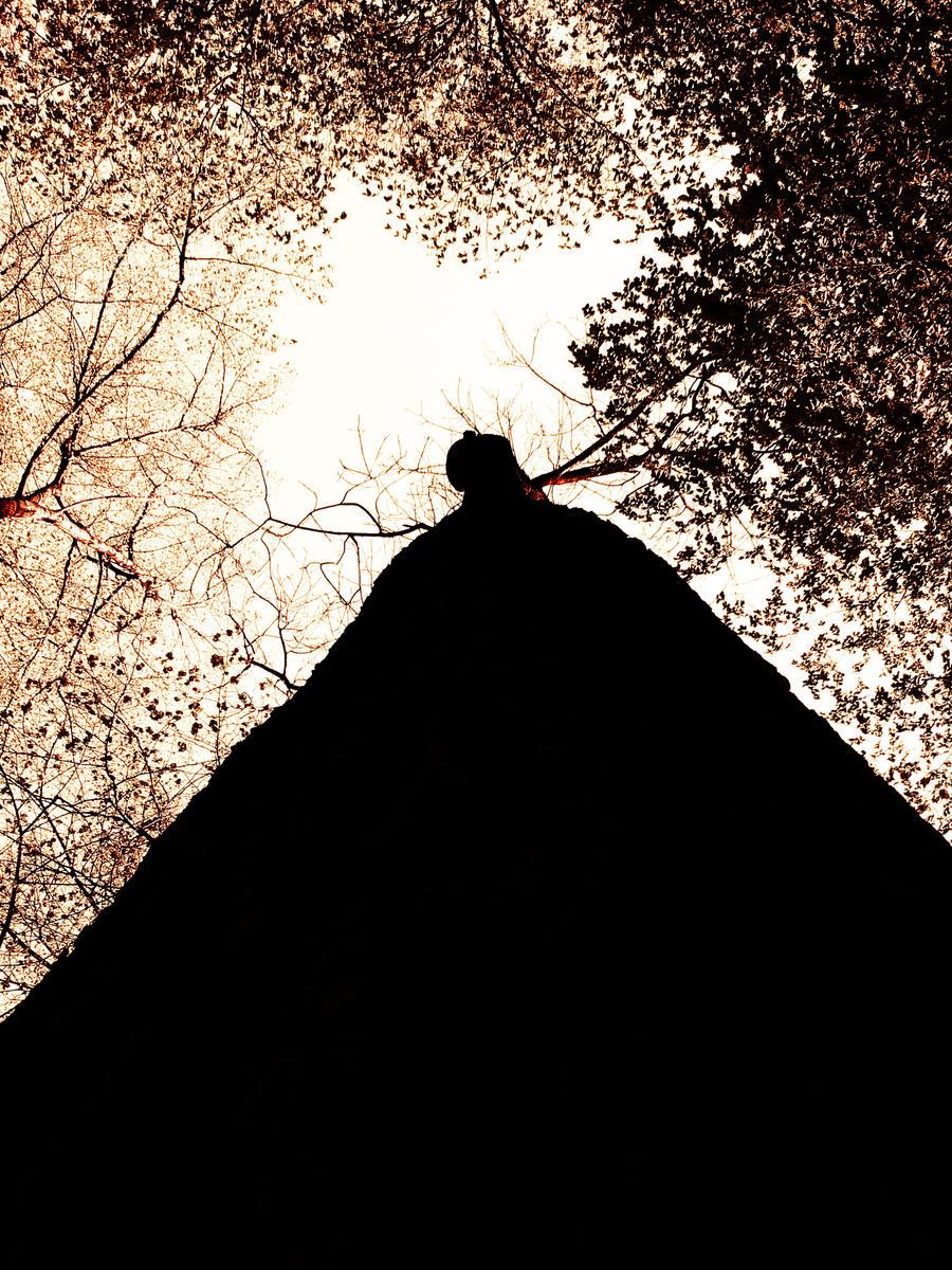 Tree...2 by FERONAS