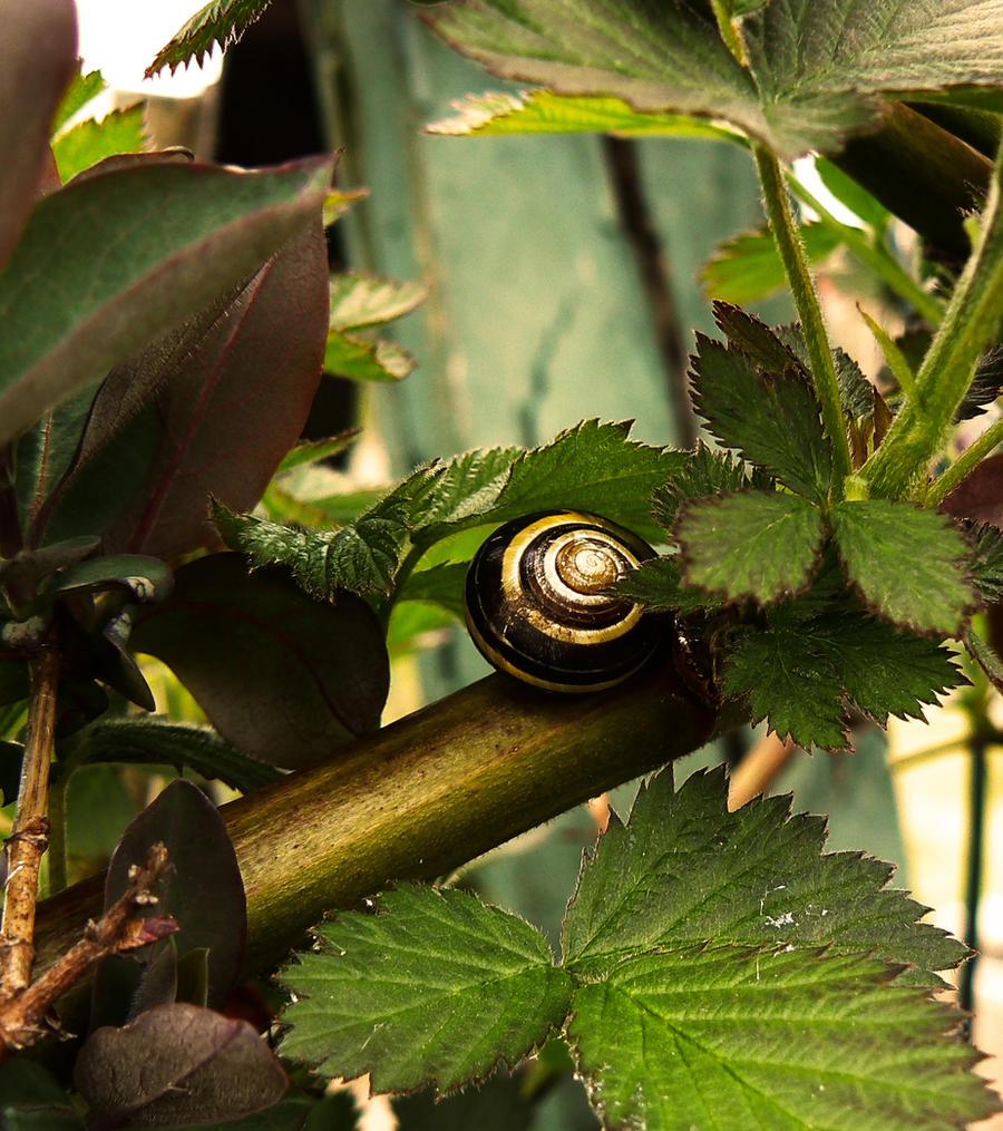 Snail... by FERONAS