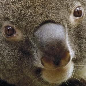 Shnurbinator's Profile Picture