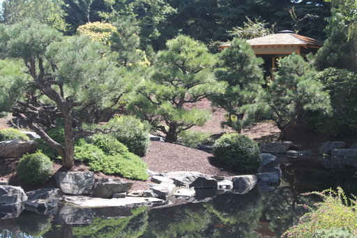 Japanese Garden by SpyderCollins