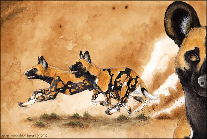 On The Hunt by Anatoliba