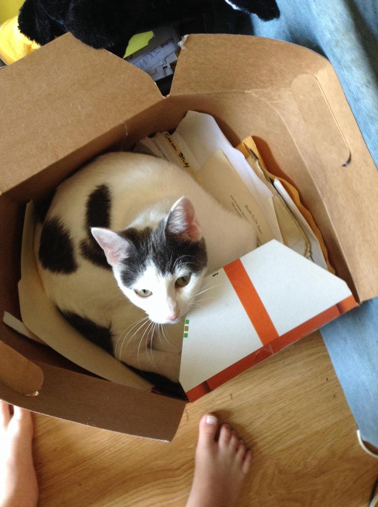 My kitten in a box by Dacat335