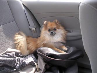 Backseat Bear by SilntAngl5