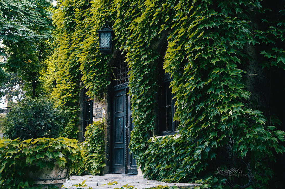 Ivy house by Focus-On-Me-Photo